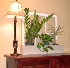 interior casual picture of living room decoration using plants