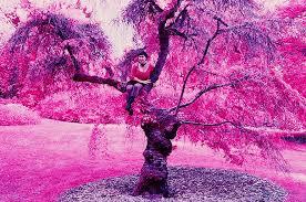 file color infrared sfoseayyz tree jpg wikimedia commons