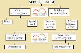 study of nervous system 2017 2018 student forum
