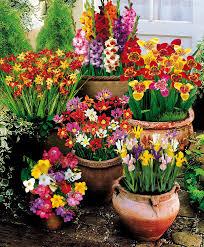 buy 100 summer flowering bulbs bakker