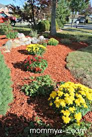 Fall Landscaping Ideas by Mums U0026 Red Mulch Mommya Z Com Fall Pinterest Yard Ideas