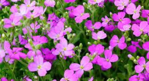 fiori viola fiori viola tavolozza della natura fai da te in giardino