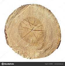 wood tree rings images Tree rings wood log wooden texture stock photo interpas jpg