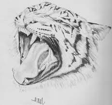 pencil drawing animals pencil drawing of a animal drawing art