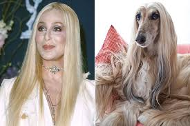 afghan hound blonde 25 celebrities whose horse doubles are scarily similar