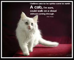 Awesome Quotes About Cats Being - 7 best gorgeous cats images on pinterest adorable kittens i love