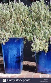 green plant in a blue glazed ceramic flower pot plants foliage
