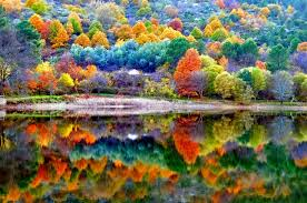 forest tree colors trees green lake tapet blue autumn color water