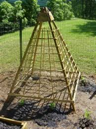 Trellis For Cucumbers In Pots How To Build A Cucumber Trellis