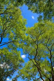 trees and plants images free stock photos 18 159 free
