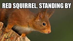Squirrel Meme - red squirrel standing by red leader standing by know your meme