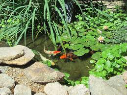 backyard ponds phoenix outdoor furniture design and ideas