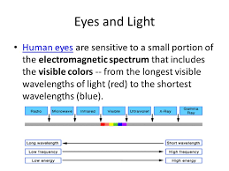 Eyes Are Sensitive To Light The Camera Eye The Camera Eyethe Camera Eye Linda Dextre U0027 Lms Ppt