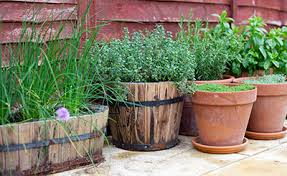 Herb Container Garden - harvesthyme vegetables and herbs container gardens