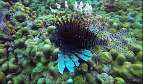flower gardens gulf of mexico scuba diving youtube