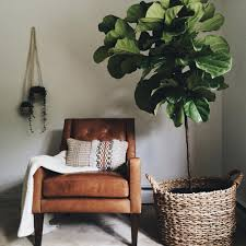 What Is An Indoor Garden Called - decorating drama 10 really big plants you can grow indoors big