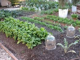Fall Vegetable Garden Ideas Garden Design Garden Design With Vegetable Garden Time For Fall