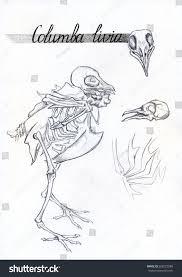 monochrome skeleton skull bones dove pigeon stock illustration