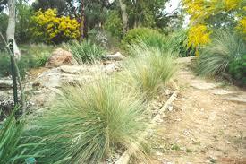 landscaping gardenning australian grasses nativeseeds