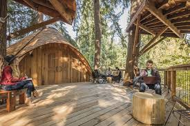 microsoft built tree houses for its employees the verge