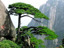 plants of china ks2 primary