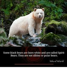 Bear Memes - 25 best memes about black bears black bears memes