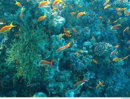 10 amazing sea creatures around the world institute of ecolonomics