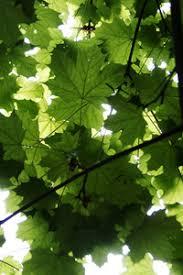 bright green tree leaf texture royalty free stock image storyblocks