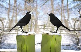 angry birds garden ornament yard for bird