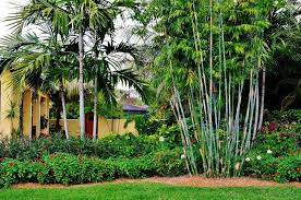 South Florida House Plans 100 Florida Landscape Ideas Maintenance Free Landscaping