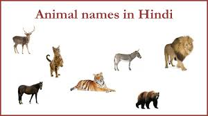 animal names in hindi hindi pinterest