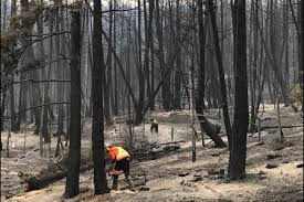 Wildfire Kootenays by Video Bc Wildfire Service U201coptimistic U201d About 150 Mile Fire