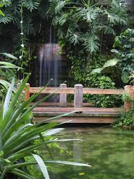 japanese plants for sale cascading backyard waterfall lit up at