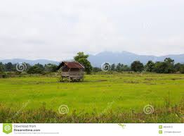 East Coast Tiny Homes by Tiny House In The Paddy Field Stock Photo Image 46549913