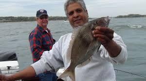 black rose fishing charters u2013 porgy trips from buzzards bay