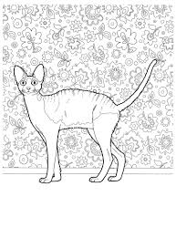 cat 22 cats coloring pages for teens and adults favorite cat
