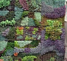 wall gardens can add such interest to a garden succulent mural