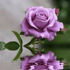 beautiful flowers youtube