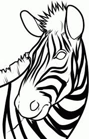 best 25 zebra drawing ideas on pinterest zebra tattoos zebra