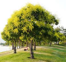 different types of trees steele different trees create different types of shade kelowna