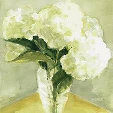 white hydrangeas white hydrangea prints america