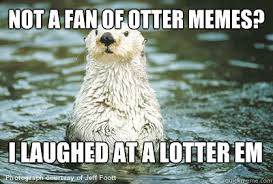 Sea Otter Meme - list of synonyms and antonyms of the word otter memes