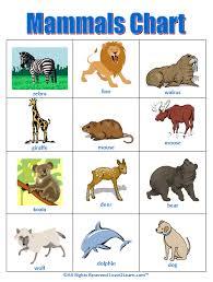mammals mini book sheet 1 kindergarten homeschool printables