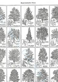 sale representative trees identification by auntsuesvintage