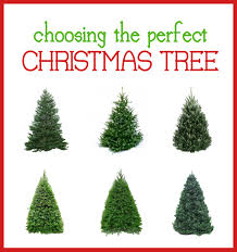 types of live christmas trees christmas lights decoration