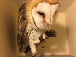 barn owls eat roaches and rodents and other nuisance animals
