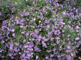 Flowering Shrubs For Partial Sun - partial sun flowers u2013 savingourboys info