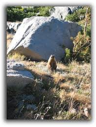 groundhogs removal raleigh critter control triangle nc