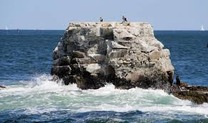 Rhode Island Where To Travel In December images Birding rhode island audubon jpg