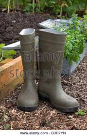 dirty riding boots dirty rubber boots on garden soil stock photo royalty free image